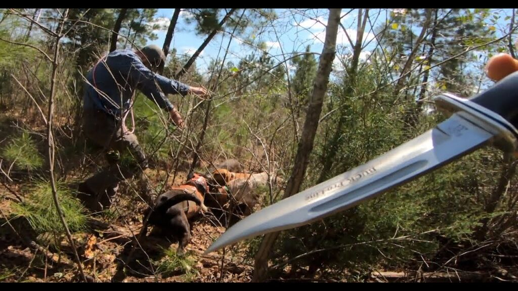 "HOG KILLED WITH KNIFE – HUNTING HOGS WITH DOGS – ""Rip 'Em"" – TSTV Hogs S2:EP2"